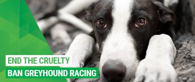 Stop the cruelty: ban greyhound racing