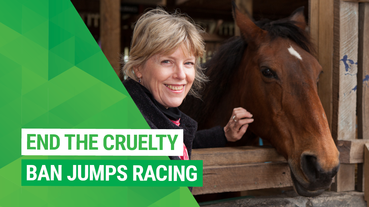 Stop the cruelty: ban jumps racing